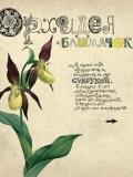 Kuvshynka book 3