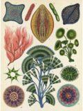 botanicum_01
