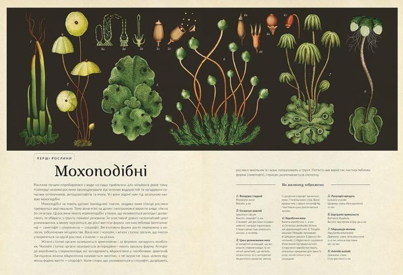 botanicum_02