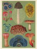 botanicum_03